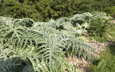 Upcoming Workshop…Perennial vegetables – Expand your gardens resiliency