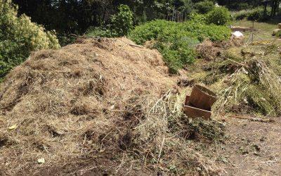 Composting 101 – Basic composting skills workshop