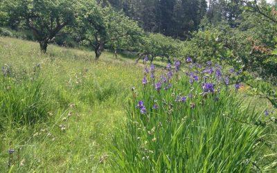 Drought proofing your landscape – Part two